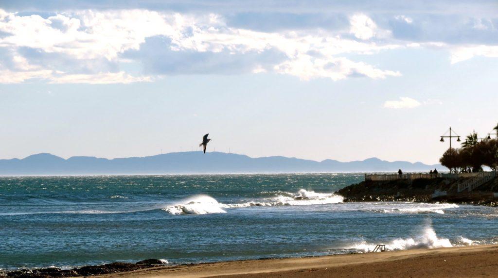 En fri fågel som flyger. Torrrevieja, Spanien.