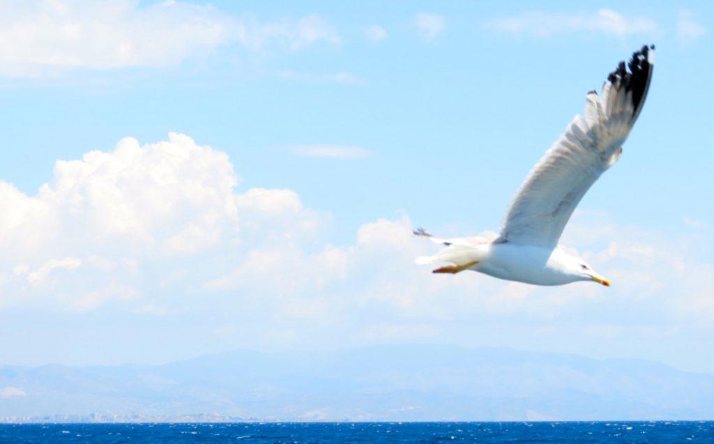 Fria fåglar flyger. Här i spanska Torrevieja