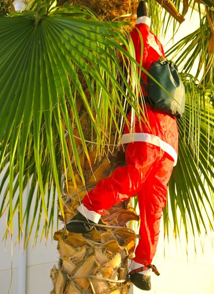 Julskyltning i form av en tomte i en palm. Dock är det idag bara andra advent så den får hänga ett tag. nt.