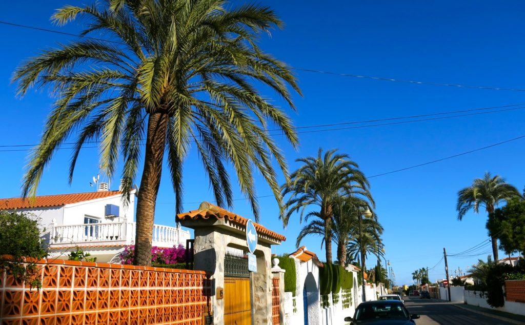 Dagens inslag av palmer och blå himmel piggar upp.