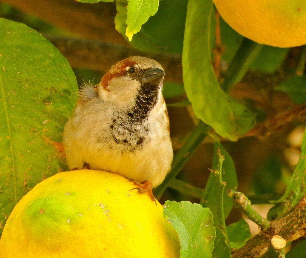 DEt finns även fåglar som tycker om frukt.