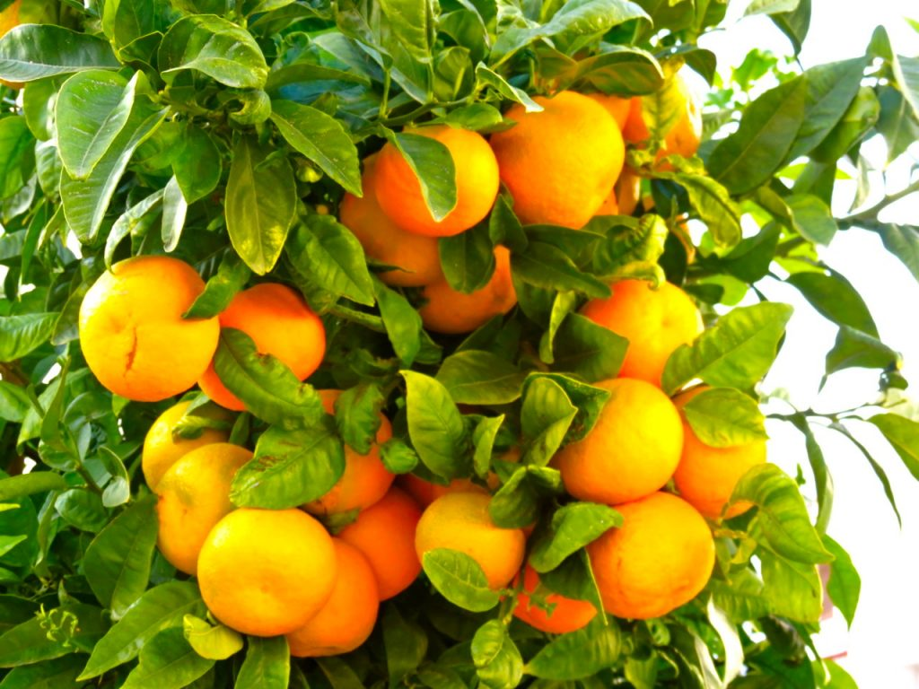 Frukt - veckans ord att tolka i Gems Weekly Photo Challenge - Ditte ... 2ee39d3ec159b