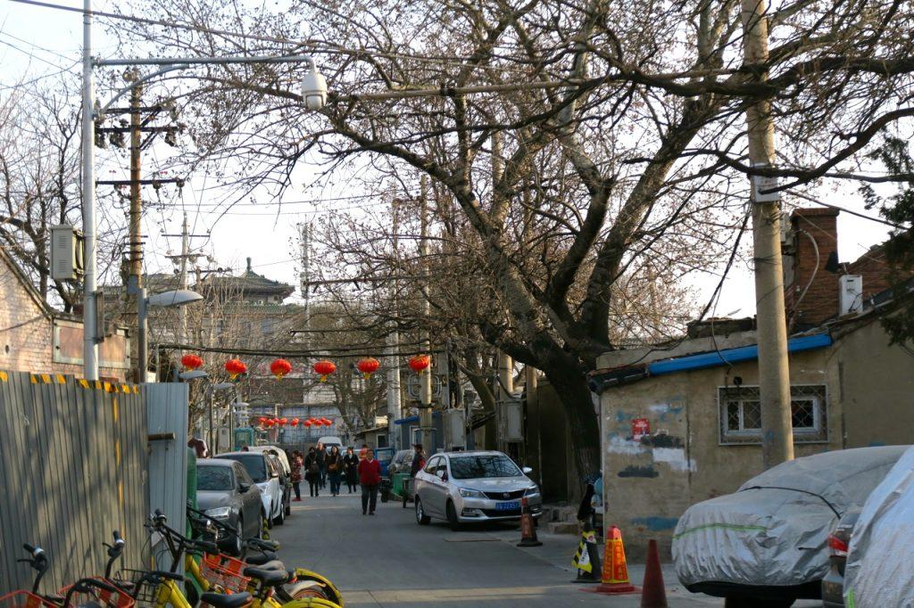 Ett grovt träd växer till synes utan näring i ett hutongområde i Peking.