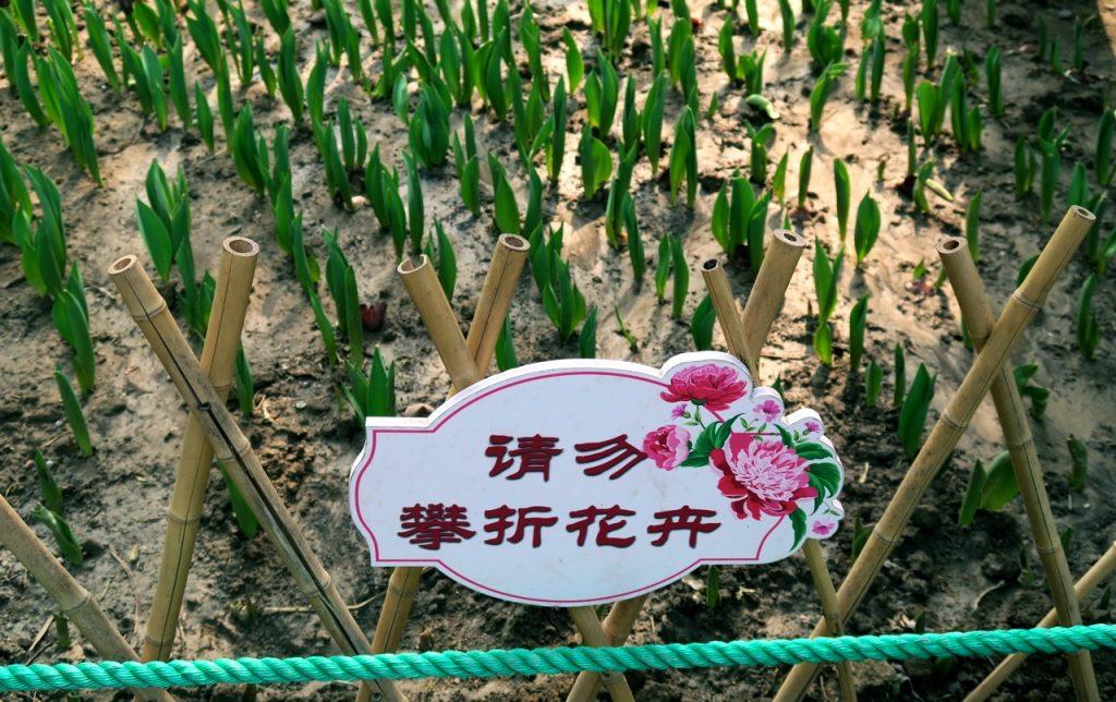 Kinesiska tecken är vackra men svåra att tyda.