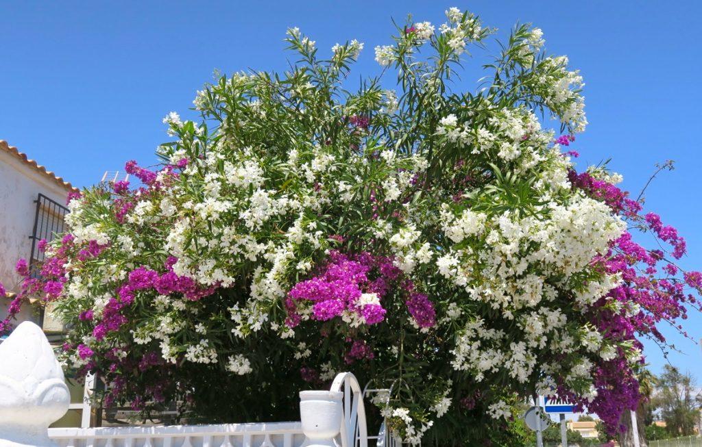 Solen och den blå himlen är oftast en vän, även i Torrevieja. Bara det finns skugga att tillgå.