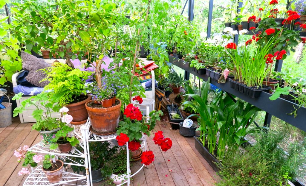 Vackra sommardagar är det och det är fint att sitta en stund i ett växthus och njuta av det vackra.