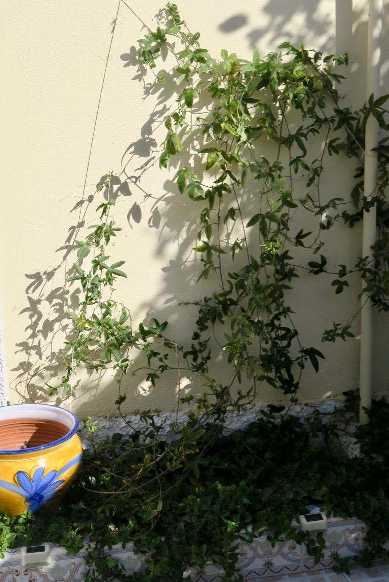 Passionsblomman fick nya trådar att klättra på och så hemma blev det annat jordnära jobb.