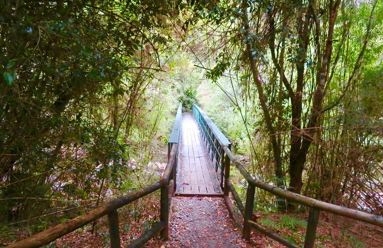 Stora regnskogsområden finns i Patagonien. Här i Chacabuko i Södra Chile, i parken Ayse del Sur.