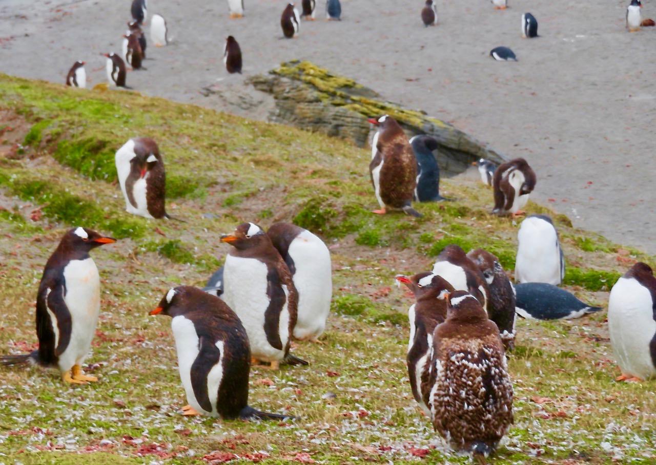 Snaba skiftingar i tillvaron. Från Falklandsöarna och Sydamerika, via Stockholm och till Spanien