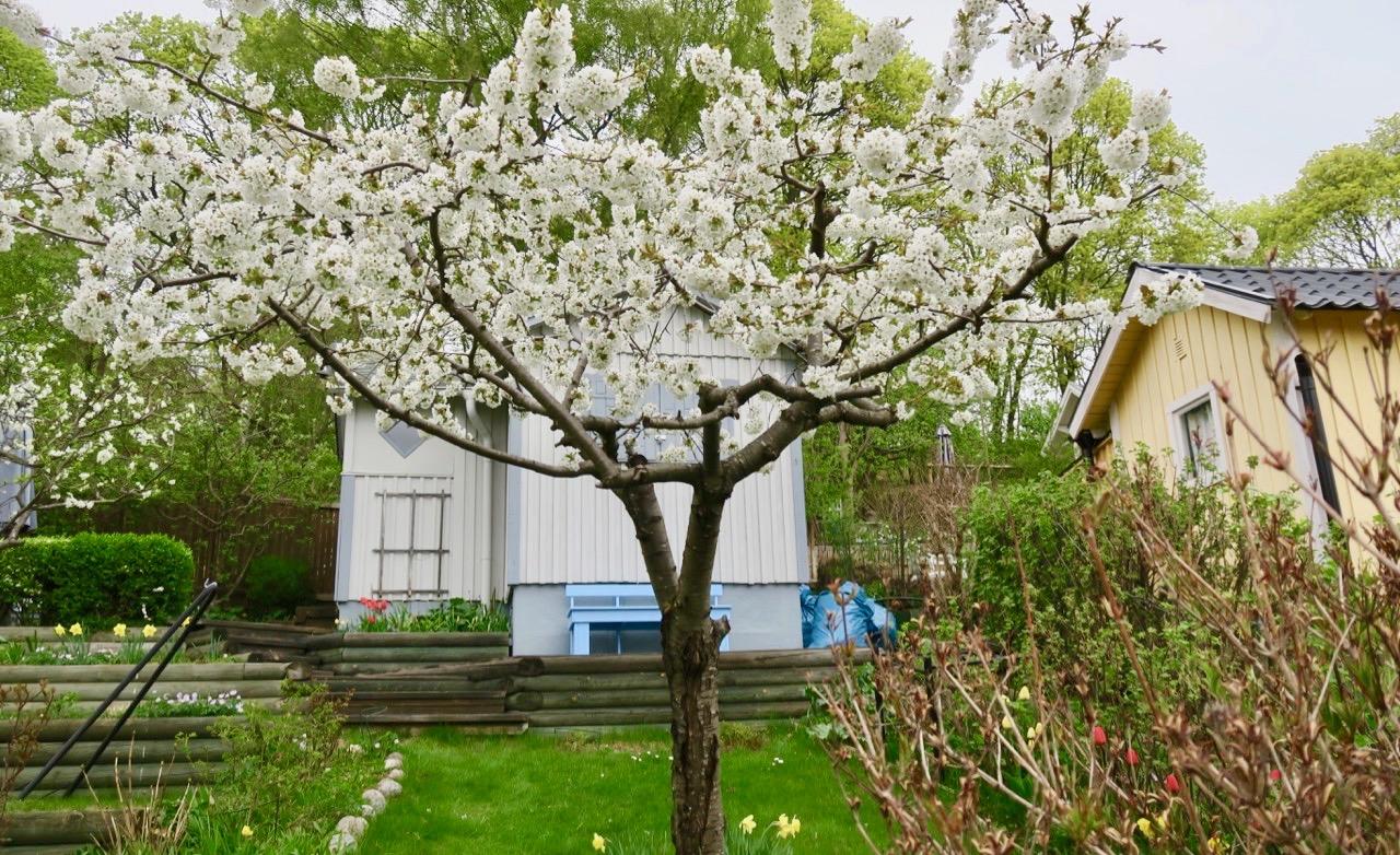 Eriksdalslunden har många grönskande och blommande koloniträdgårdar med stor charm