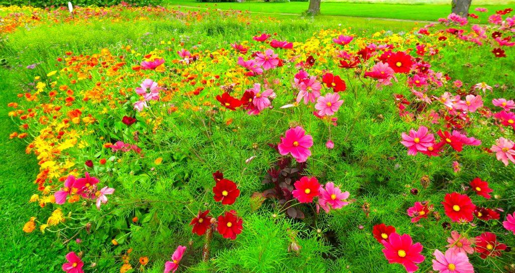 Veckans skörd, Rosendals trädgårdar