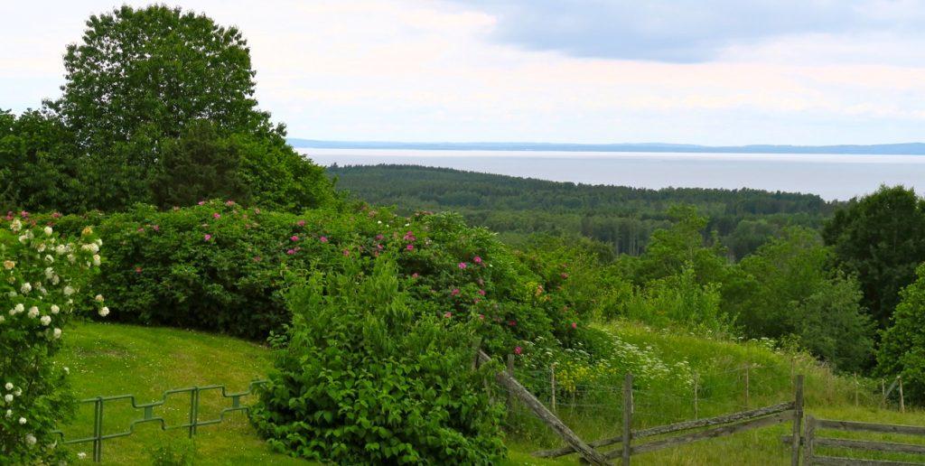 Mjuka, bökjande kullar vid sjön Vättern.