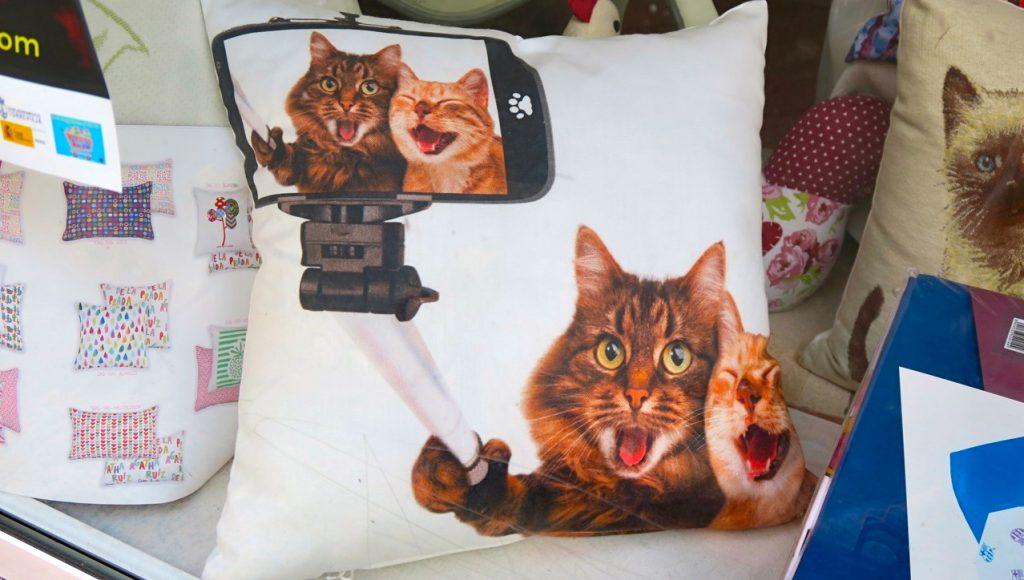 Katter, humor och glädje