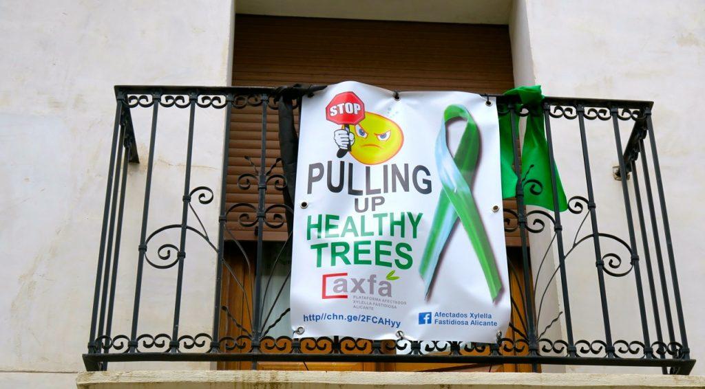 En aggressiv bakterie, xylella fastidiosa, som angriper träd och växter, har gjort att myndigheterna vill ta bort träd. Storta protester är det för kanske kan mängden täd som ska bort minskas.