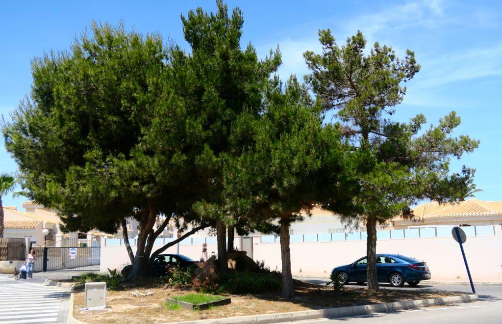 Den buss jag tog gick till Pilar de hororade, 20 km söder om Torrevieja, men en hållplats fanns i Playa Flamenca.