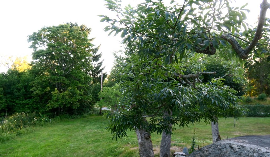 En lummig trädgård med flera sittgrupper hör till pensonat Solbackenn