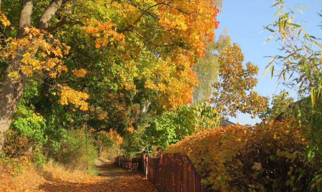 Löven bildar färgsprakande mattor längs stigen genom Eriksdalslundens koloniområde.