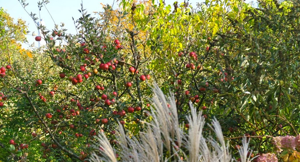 Veckan som varit har bjudit på vackra promenader på Södermalm både längs Årstaviken och bland koloniträdgårdarna.