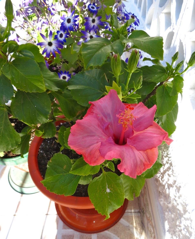 Skönt att vara hemma igen och fint att titta på blommorna på terrassen