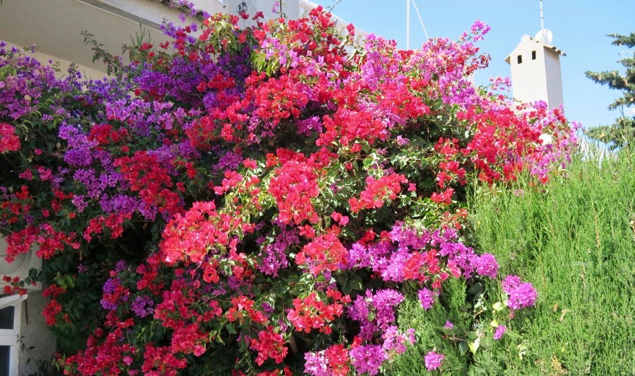 Alla fina och soliga dagar här på Costa Blanca är gynnsam för växtligheten.