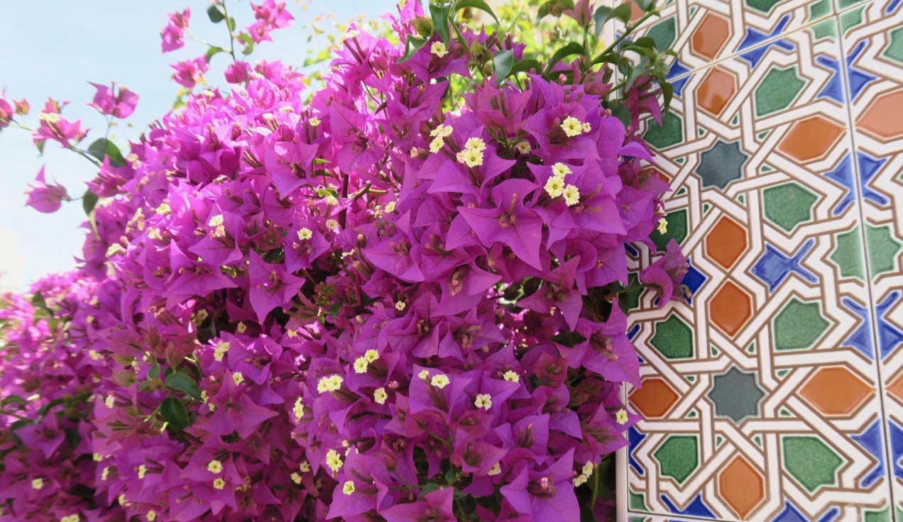 Fint att öfrena nytta och nöje och stanna upp och titta på alla vackra blommor.