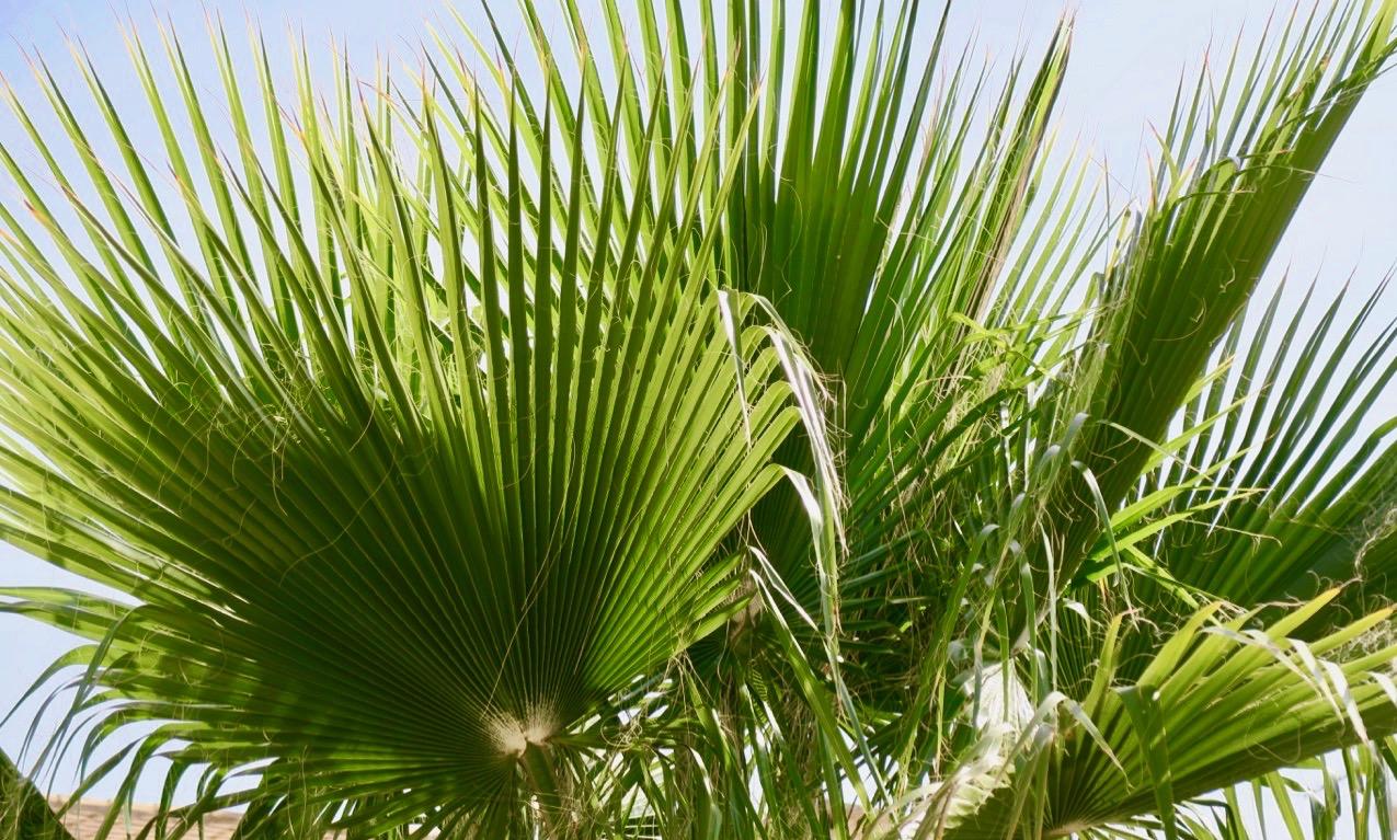 En kantig/ojämn palm