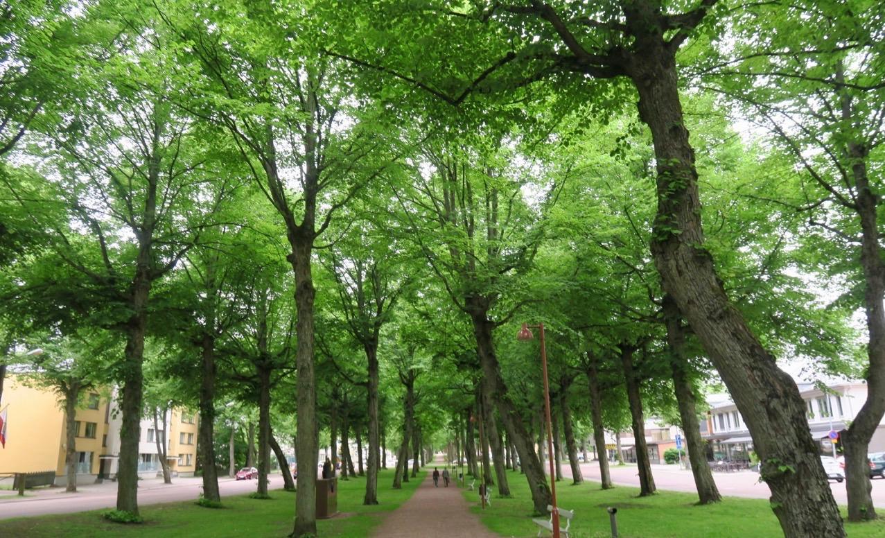 En vacker lindallé leder från Västra hamnen upp till centrum av Mariehamn