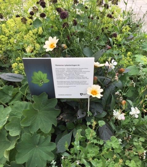 Bra och trevligt initiativ av Stockholm stad att presentera växterna för de som passerar. Här vid Gärdets tunnelbana.