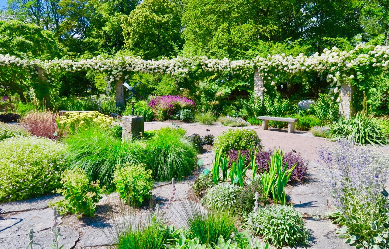 Solvisarplan, en av de 30 planer som finns i botaniska trädgården.