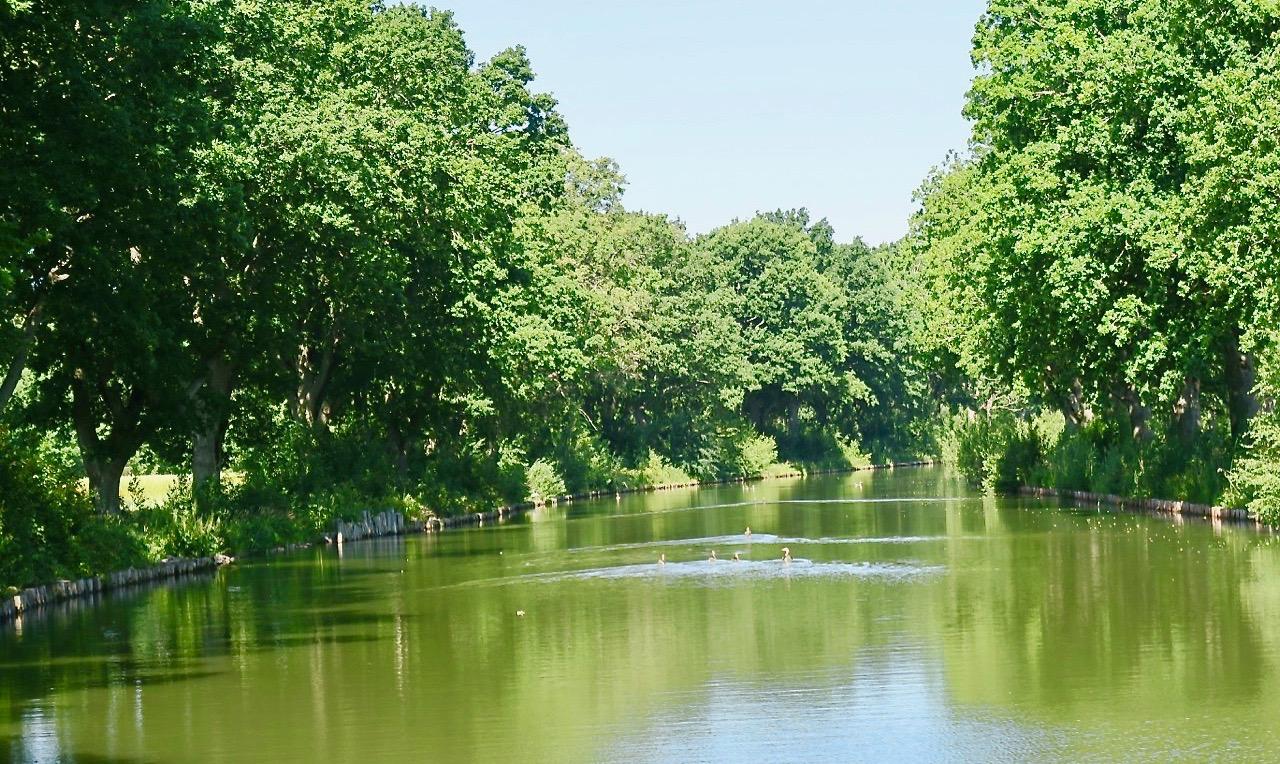 Vackert och rofylllt längs Hjälmare kanal