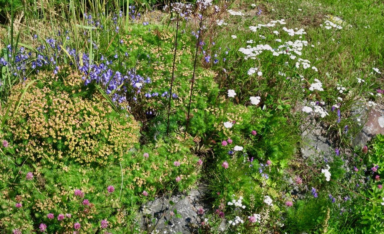 Tänk att det kan blomma så vackert när det knappast finns jord. Men kanske är det luften här ute som är hemligheten