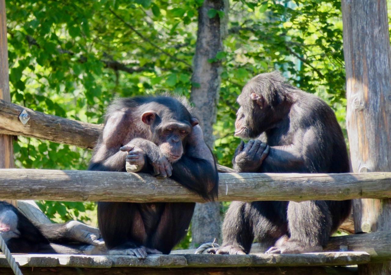 """En stor fördel här i parken i Furuvik är att man kommer """"nära"""" djuren."""