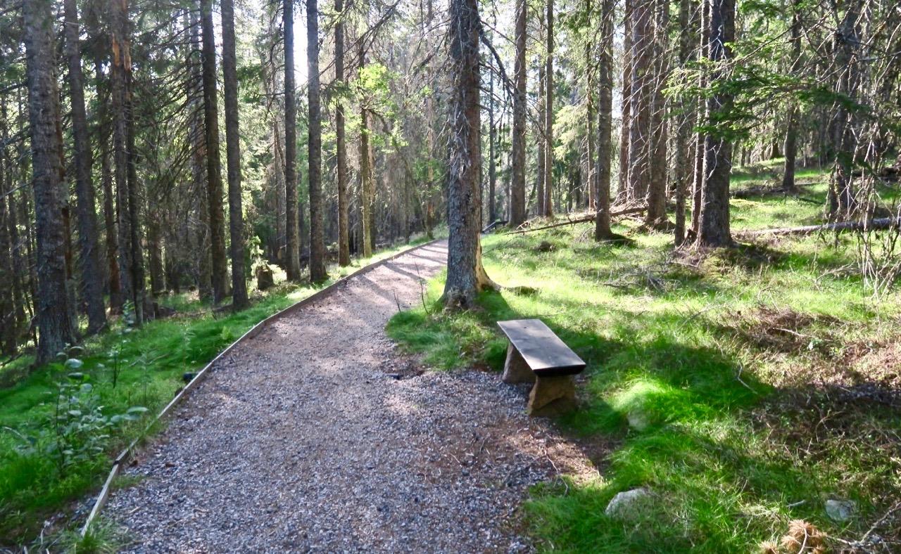 Skuleskogen i Ångermanland. Otur att jag fick ett sår och tur att det inte var värre-