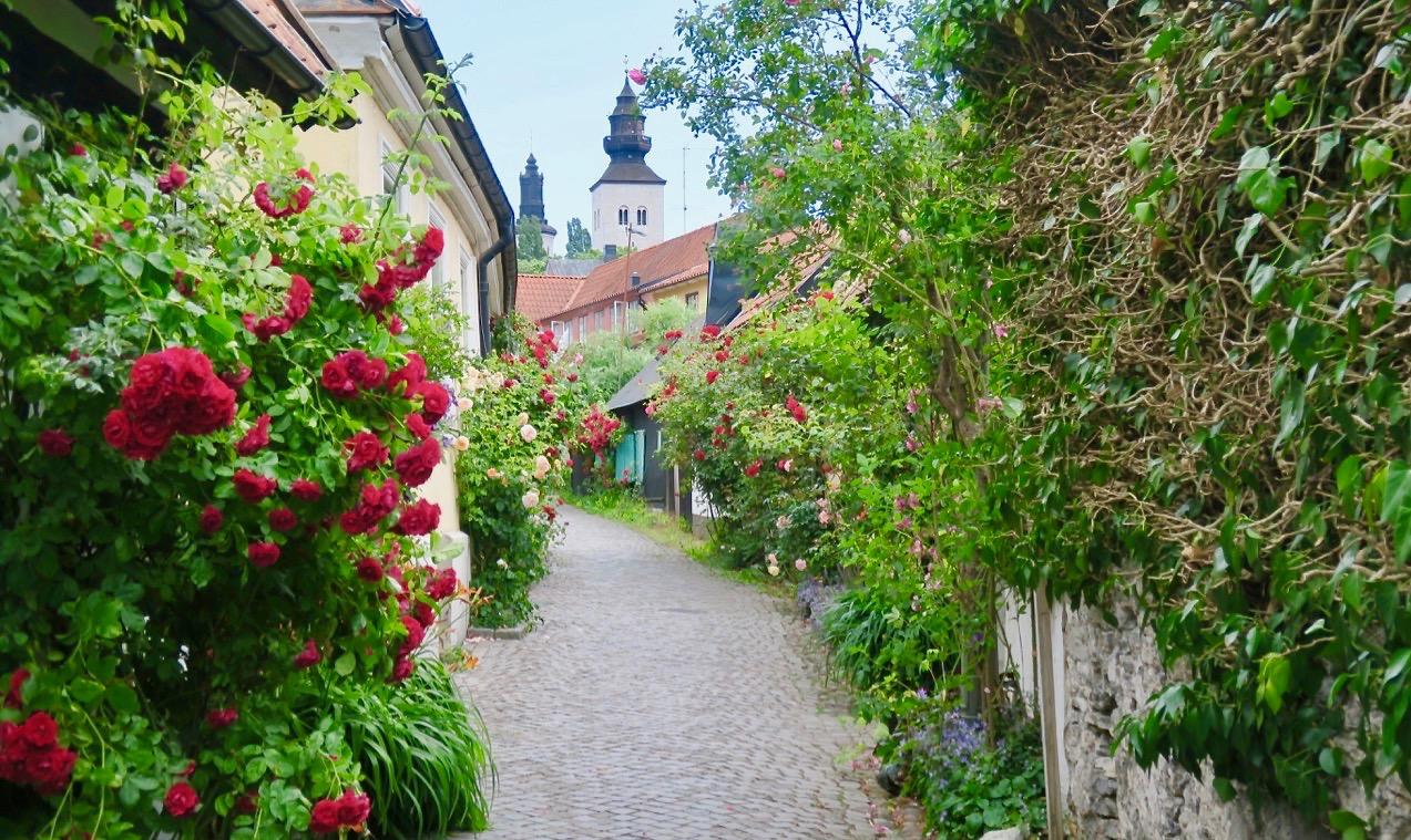VIsby, rosornas och ruinernas stad är en av de platser jag tankemässigt skulle kunna bo .