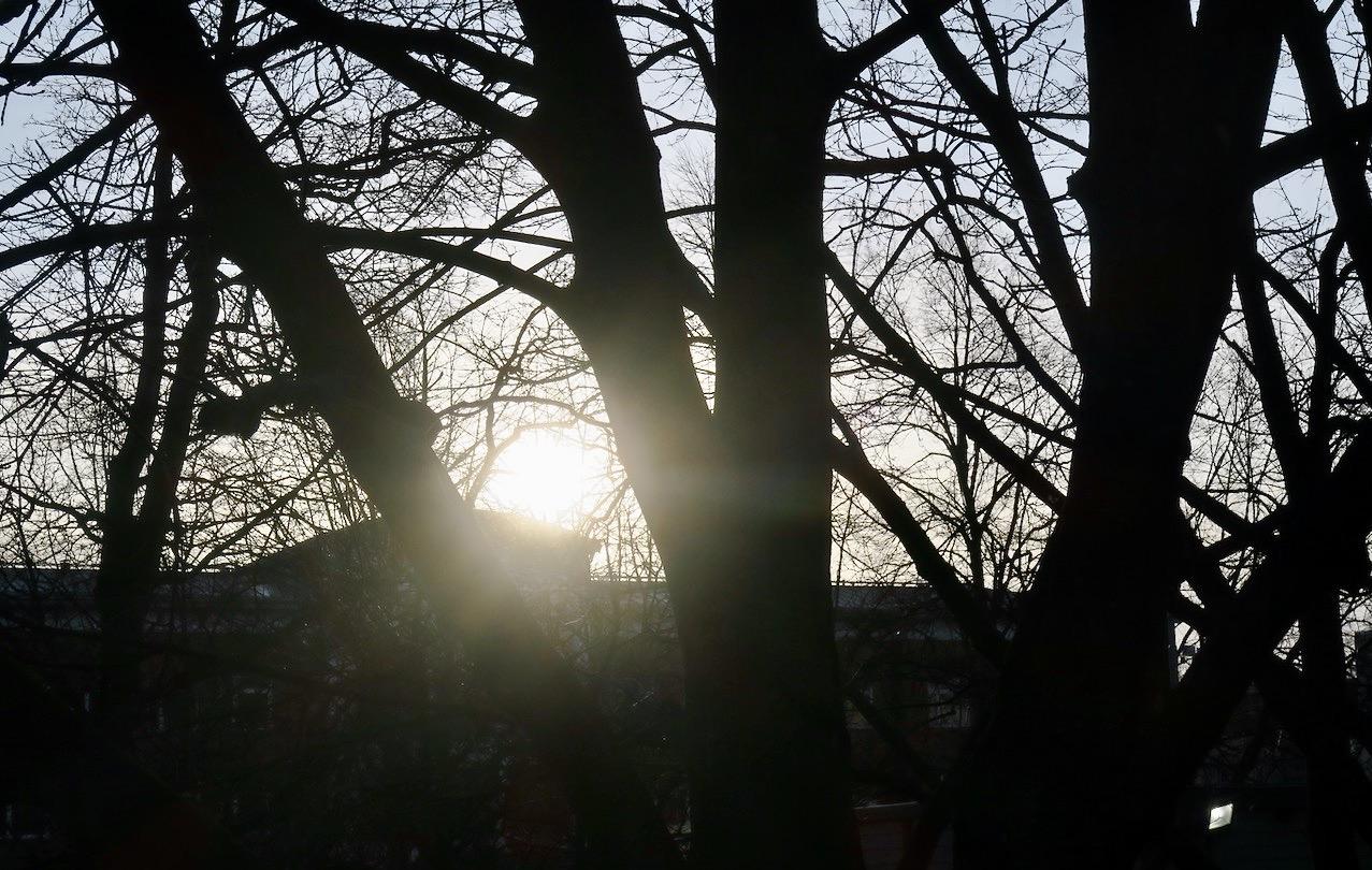 Solen leker kurragömma och försöker gömma sig mellan träden och bakom Tullgårdsskolan.