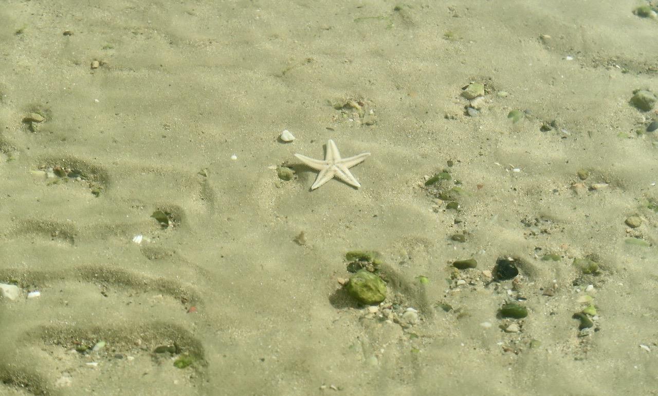 Vattnet var klart och jag lyckades här längs havet och stranden fånga en sjöstjärna på bild.