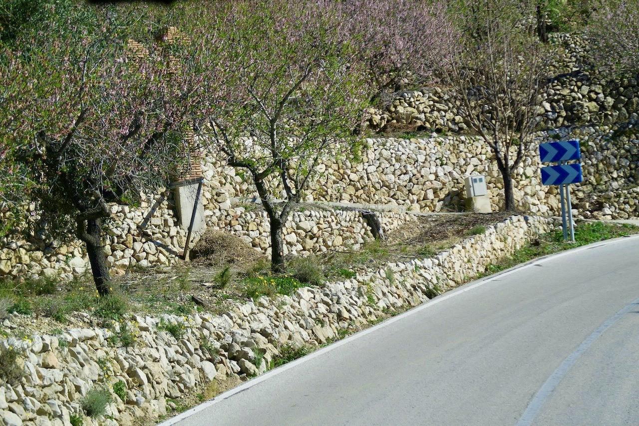 Mandelträd kantar här ovanför Benidorm de smala och kurviga vägarna.