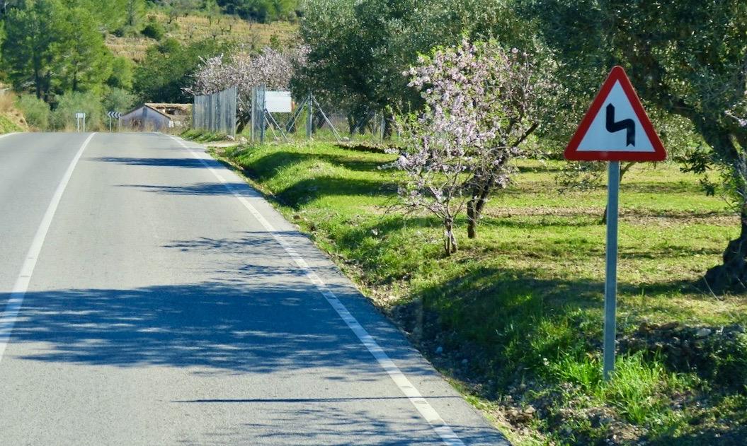 En del mandelträd växer mer fritt och andra är inhängnade.