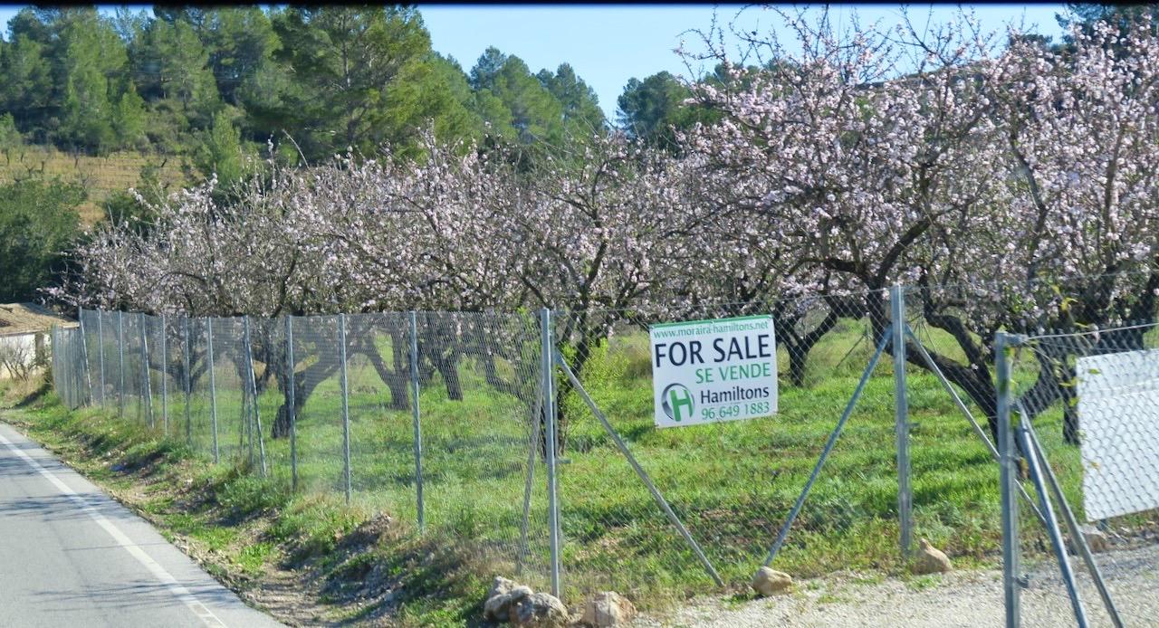 Till salu! En odling med mandelträd. I alla fall ett vackert läge här på Costa Blanca.