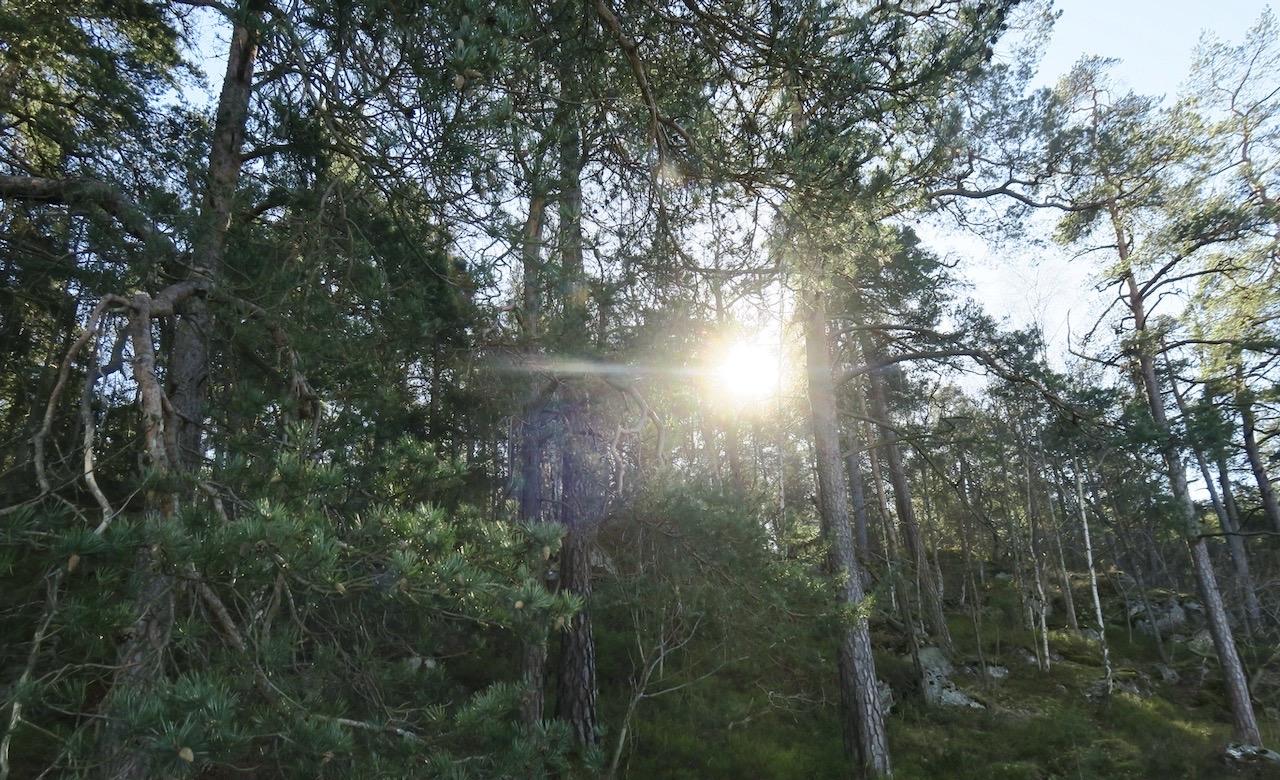Promenden är sjönära längs Svindersviken. Men också skogen ligger nära.