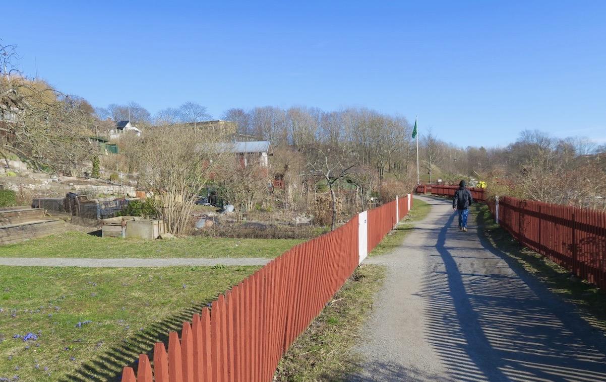 Vi fortsätter framåt längs grusvägarna i Årstalundens koloniområde.