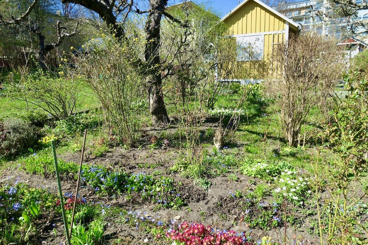 Folk i farten har det varit vid Eriksdalslundens koloniområde på Södermalm. Vårbruket är långt kommet.