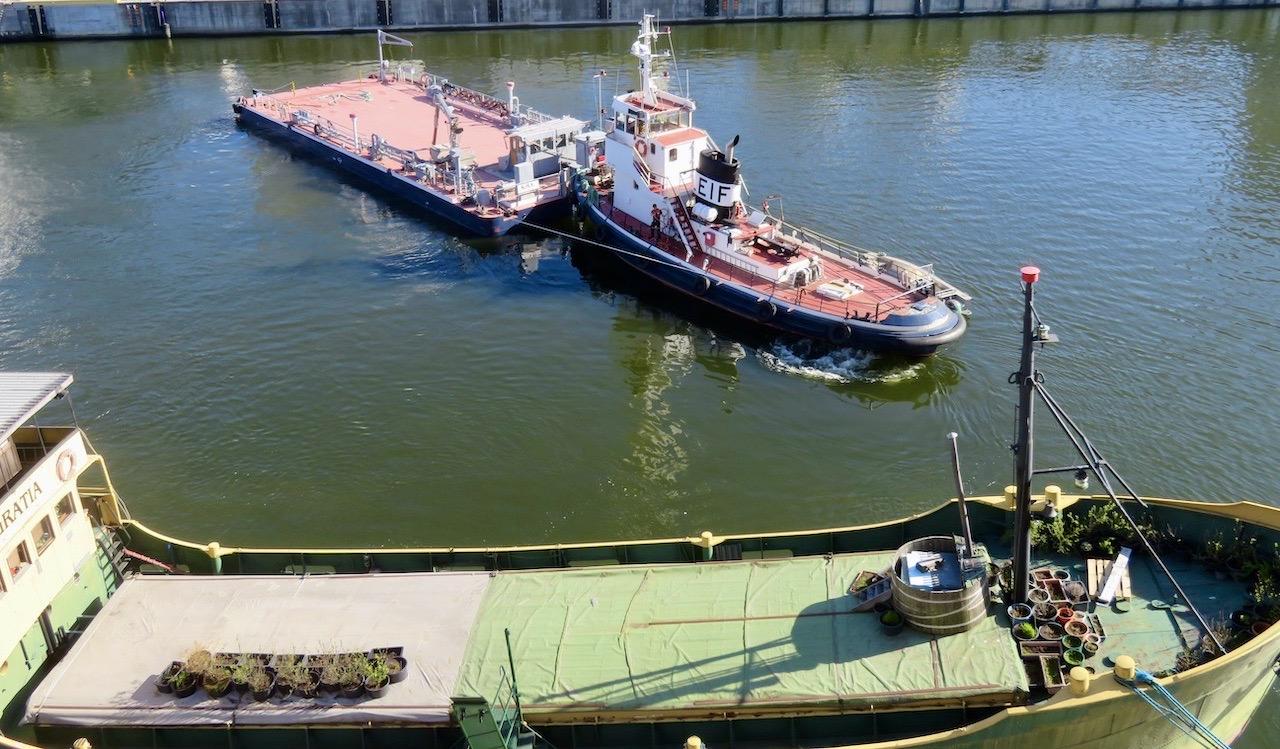 Husbåten Gratia förvandlas nu under våren till ett grönskande växthus.
