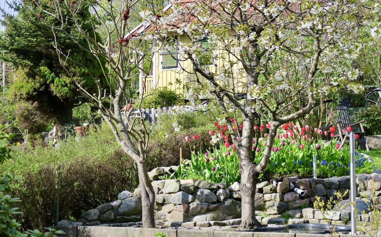 Eriksdalslundens koloniområde. Mitt i naturen. Skir grönska och vackra blommor.