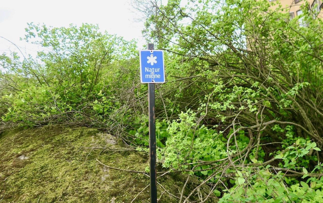 Viss rörelse krävs för att ta sig fran här i naturminnet i Pålsundsparken. Humor också.