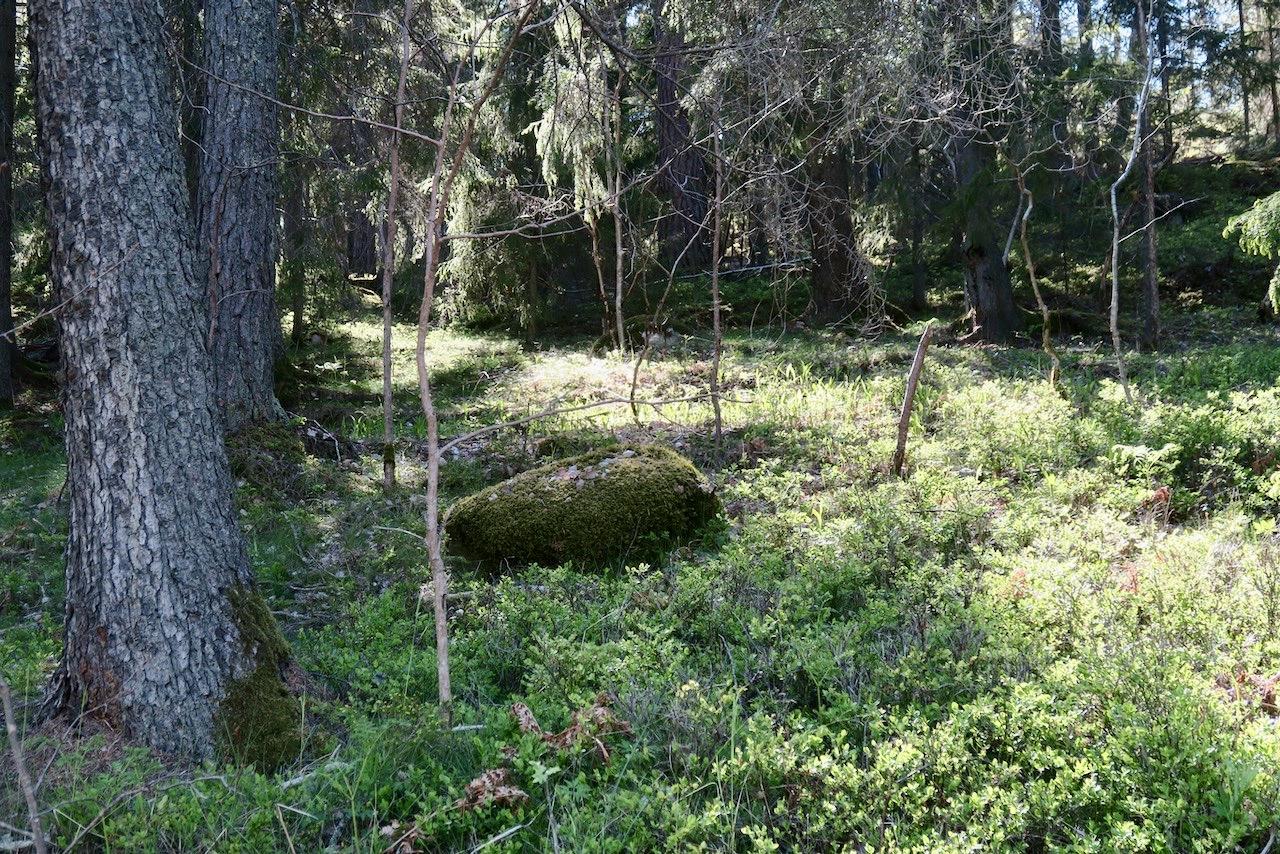 Evlinge. Och har jag nu kommit ut till landet så blir det också en vända i skogen.