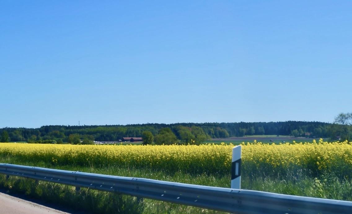 I slutet av maj såg det ut så här på åkrarna när vi var på väg till Uppsala.