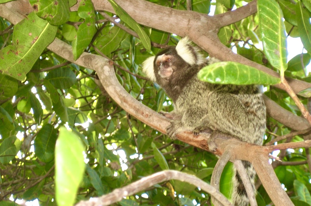Tår är nödvändiga även för en apa och gör att dne kan klamra sig fast i träden och vid hopp mellan träden.