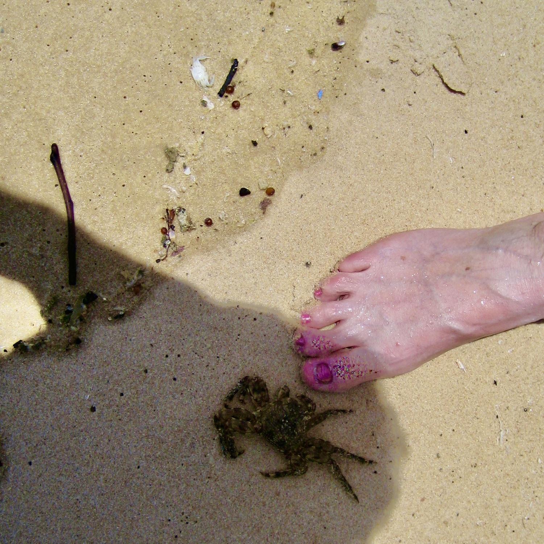 En strand i brasilien. Och en krabba tittar intresserat på mina tår.