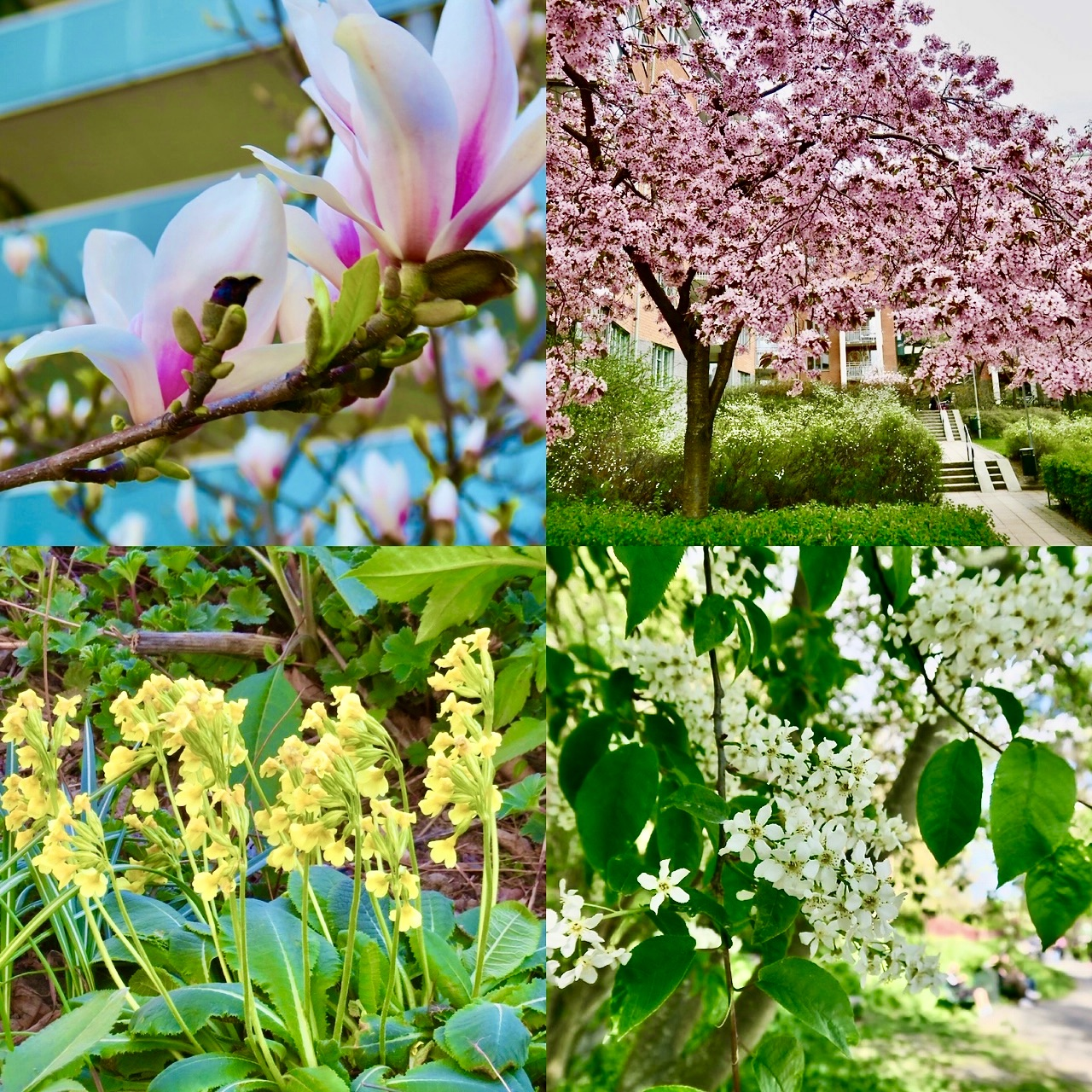 Blommor från vår innergård.